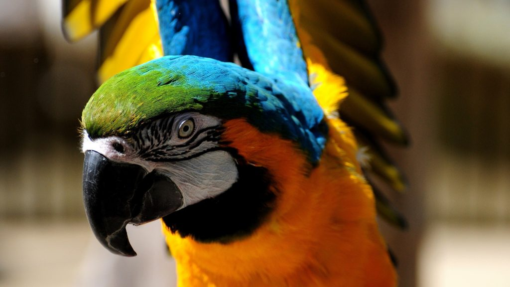 Macaw In Practice